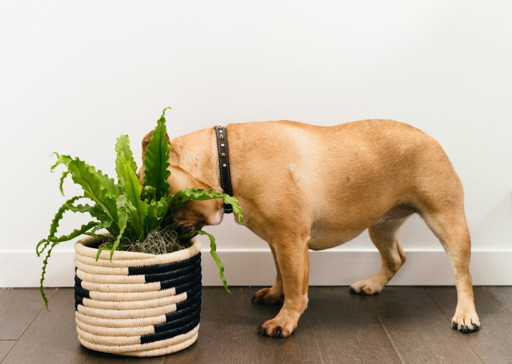 Dog and plant